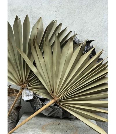Suszony liść palmy naturlany