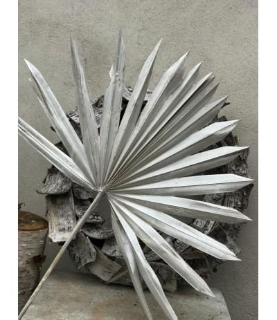 Suszony liść Palmy bielony