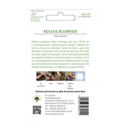 L.Koleus Blumego 0,1g