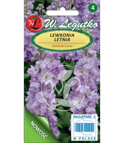 L.Lewkonia letnia liliowo-niebieskie