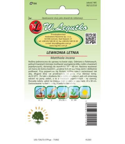 L.Lewkonia letnia fiolet