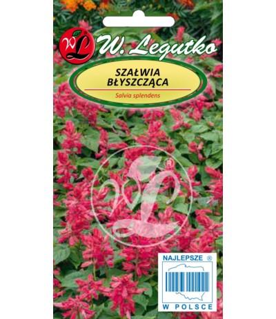 L.Szałwia błyszcząca różowa