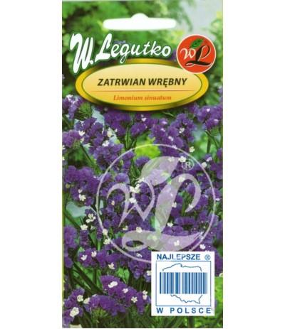 L.Zatrwian wrębny fiolet