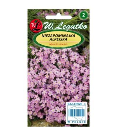 L.Niezapominajka alpejska różowa