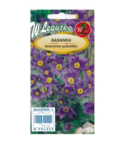 L.Sasanka zwyczajna fiolet