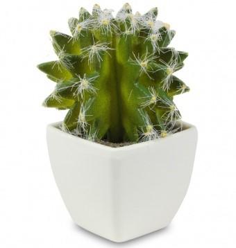 A.P.Kaktus w donicy
