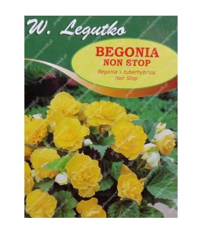 L.Begonia bulwiasta Non Stop żółta