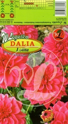 L.Dalia ogrodowa Lolita