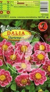L.Dalia ogrodowa Hartenaas