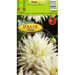 L.Dalia ogrodowa kaktusowa Albita
