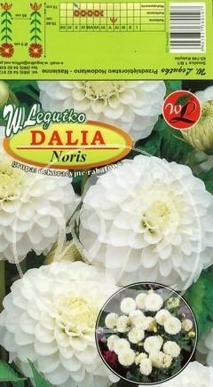 L.Dalia Noris