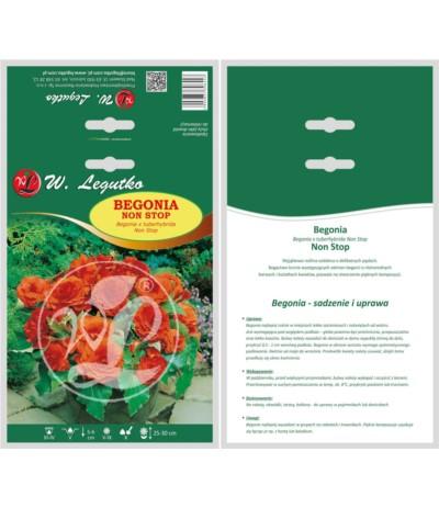 L.Begonia bulwiasta Non Stop pomar