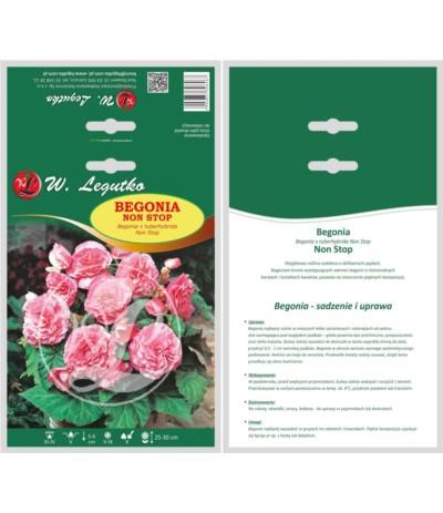 L.Begonia bulwiasta Non Stop różowe