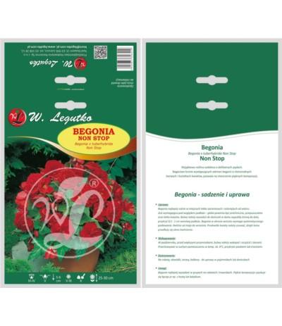 L.Begonia bulwiasta Non Stop czerw