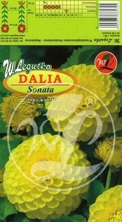 L.Dalia ogrodowa Sonata