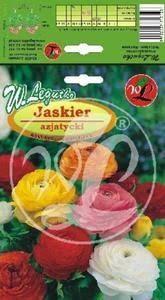 L.Jaskier azjatycki mix