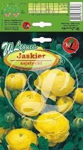 L.Jaskier azjatycki żółte
