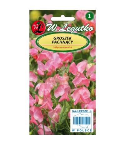 L.Groszek pachnący różowy