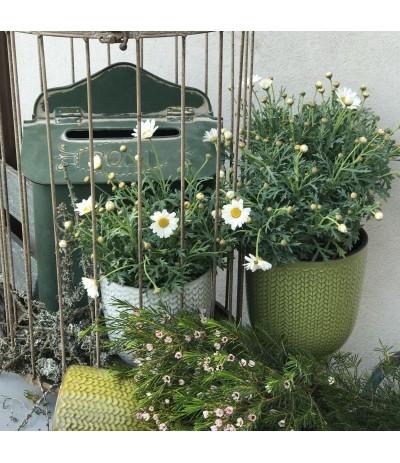 Garden green Skrzynka na listy