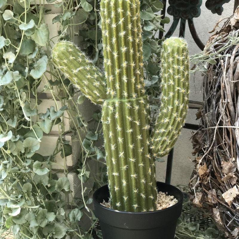 R.Sztuczny kaktus