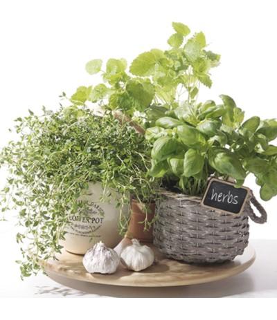 Paw Serwetki papierowe 33/33 zioła