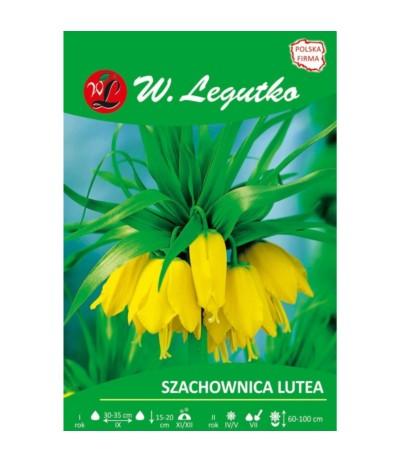 L.Szachownica Lutea 1szt