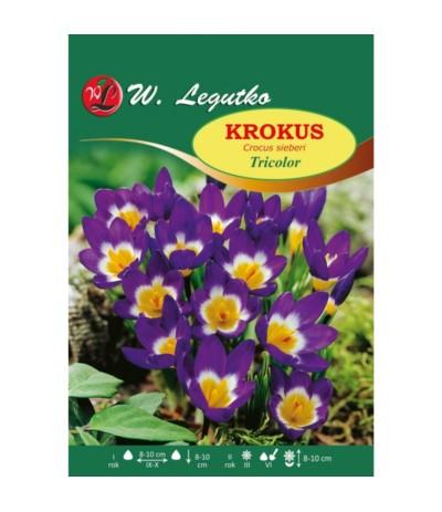 L.Krokus Tricolor 10szt