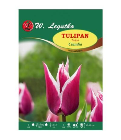 L.Tulipan Claudia 5szt