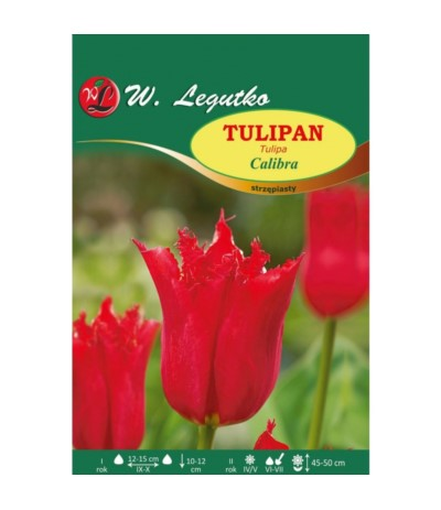 L.Tulipan strzępiasty Calibra 4szt