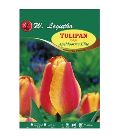 L.Tulipan Apeldoorn's Elite 5szt