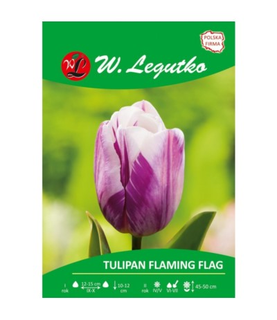 L.Tulipan Triumph Flaming Flag 5szt