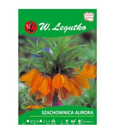 L.Szachownica Aurora