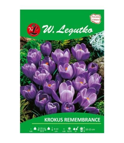 L.Krokus Remembrance 7szt
