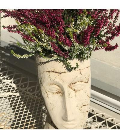 B.Głowa Modigliani średnia
