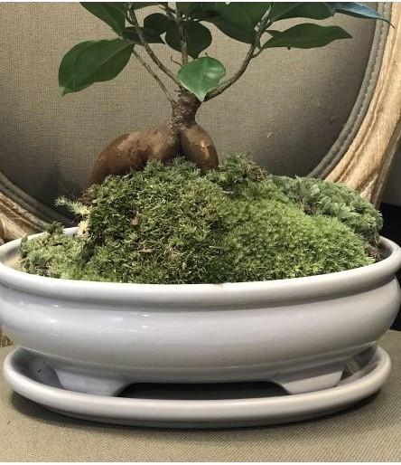 Kolekcja Bonzai/Kaktus