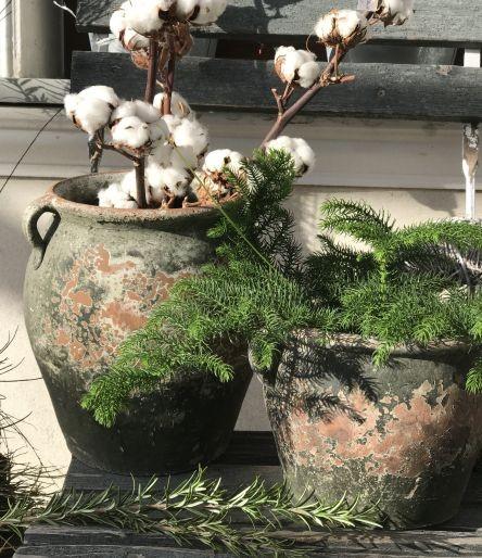 Kolekcja Mystic Pot