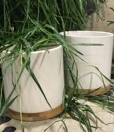 Kolekcja Bamboo